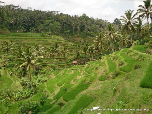 1-indonesia